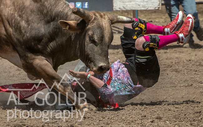 Bullfighter needs help at the 68th annual Oakdale Saddle Club Rodeo on Sunday, April 14, 2019.  (Al Golub/Record Photo)