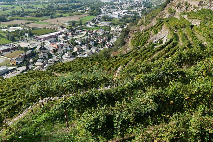 Vigneti della casa vinicola Nino Negri prima della vendemmia. Valtellina, 15 settembre, 2007<br /> <br /> Vineyards of Nino Negri wine company before the grape harvest. Valtellina, September 15, 2007