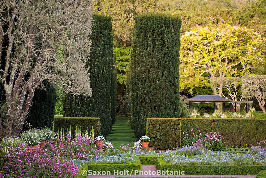 Yew alleé (Taxus baccata) pruned tree shrubs by Bowling Green Garden in Filoli formal estate garden