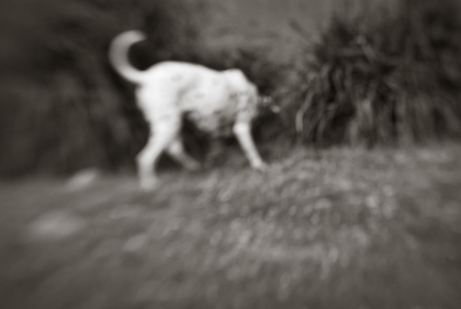 Blurred black and white photo of dog hunting in the grass.