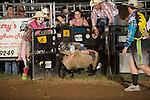 SEBRA - Gordonsville, VA - 8.13.2016 - Mutton Bustin'