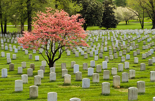 Arlington cemetery in Washington DC, USA