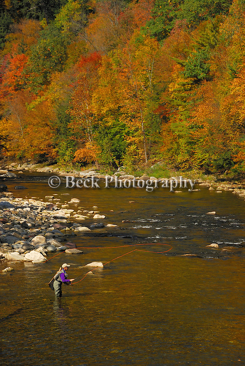 Fly fishing in the fall on  the Loyalsock Creek, PA