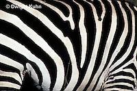 MA38-003z  Zebra - stripes - pattern in nature - Equus spp.