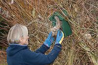 Vogel-Nistkasten reinigen und altes Nistmaterial entnehmen, Reinigung, Säubern, Säuberung, Pflege, Nistkasten. Cleaning nest box, nesting-box for birds