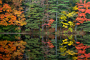 Ballard State Forest - Reflection of autumn in Ballard Pond in Derry, New Hampshire USA.