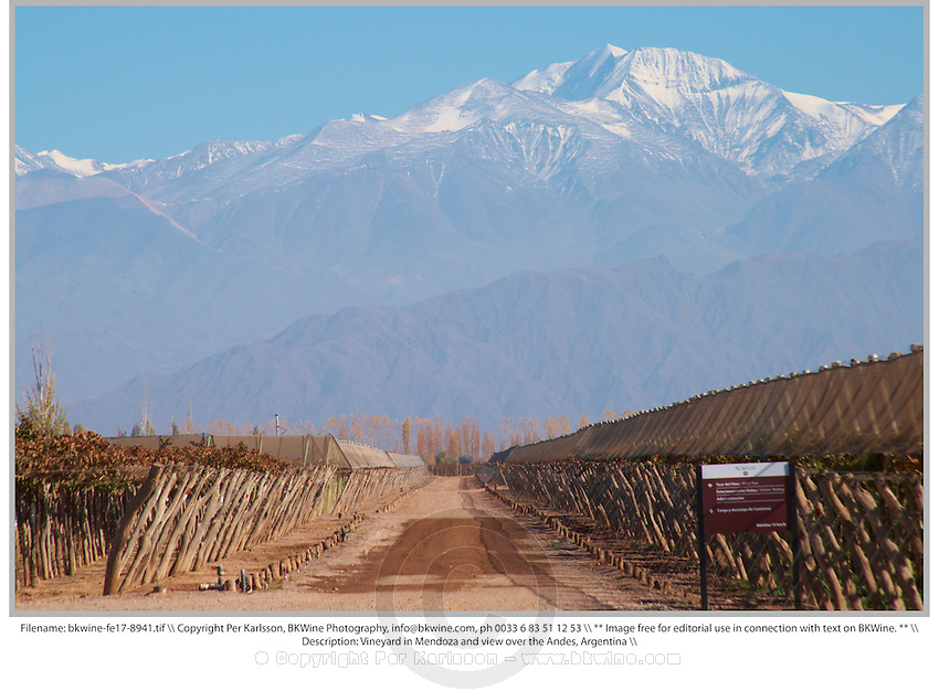 Vineyard in Mendoza and view over the Andes, Argentina