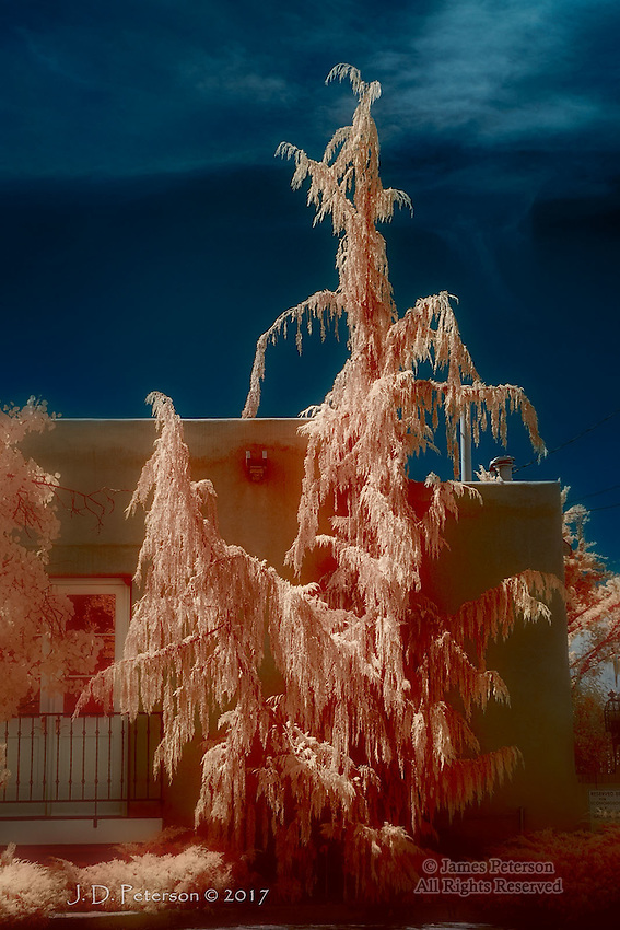 Fire Tree along Canyon Road, Santa Fe (Infrared) ©2017 James D Peterson.  A summer scene along an iconic route is transformed by an infrared photograph.