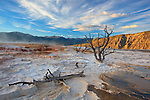 Yellowstone National Park, WY <br /> Evening clouds spread over the travertine terraces and weathered trees on the upper terrace of Mammoth Hot Springs