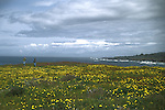 Walking through a field of wildflowers on the Mendocino Coast Headlands in California.