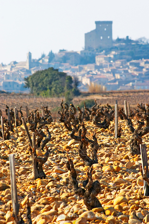 The vineyard of Chateau des Fines Roches with grenache vines and pebbly rocky galet soil and a view over the village Chateauneuf-du-Pape, Vaucluse, Rhone, Provence, France