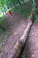 A notch cut in a fallen tree across a hiking trail, Eno River State Park, near Durham, NC, August 2009.  (Photo by Brian  Cleary/www.bcpix.com)