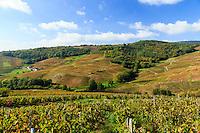 France, Rhône (69), région du Beaujolais, Fleurie, le vignoble en automne // France, Rhone, Beaujolais region, Fleurie, the vineyards in autumn