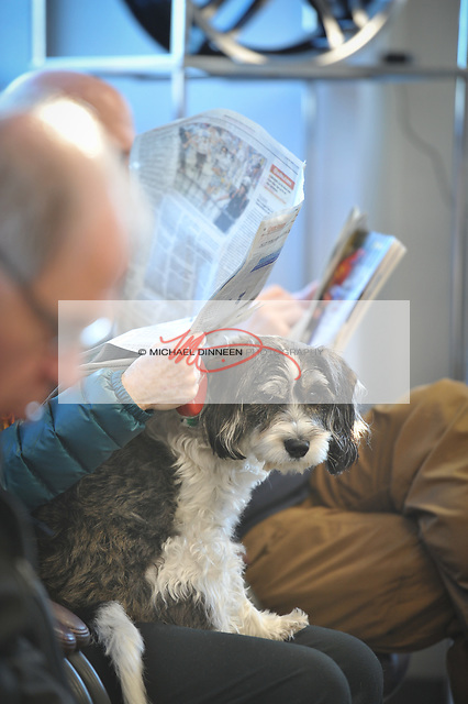 Daisy, a cocker spaniel and miniature schnauzer mix owned by Joan Diamond of Anchorage, endures the seasonal wait fodr a tire-change at Alaska Tire on 88th Ave. Photo by Michael Dinneen