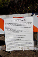 A sign in the parking lot at Bean Hollow State Beach regarding the blue whale carcass on the beach.