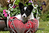 Bob, ANIMALS, REALISTISCHE TIERE, ANIMALES REALISTICOS, dogs, photos+++++,GBLA4286,#a#, EVERYDAY