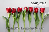 Gisela, FLOWERS, BLUMEN, FLORES, photos+++++,DTGK2545,#f#, EVERYDAY