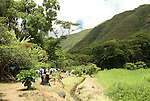 Hawaii: Molokai, Halawa Valley, with hike in past taro fields, ancient walls, to waterfalls, guided by Lawrence Aki..Photo himolo218-72016.Photo copyright Lee Foster, www.fostertravel.com, lee@fostertravel.com, 510-549-2202