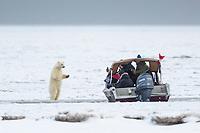 Photographers take pictures of polar bears on the Beaufort Sea, Arctic National Wildlife Refuge, Alaska.