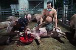 Pig Abattoir Phnom Penh Cambodia