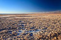 South America, Chile, Salar de Atacama laguna Chaxa