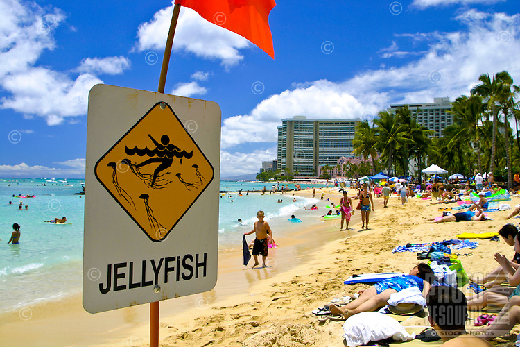 Signs warn beachgoers to be aware of the dangers of stinging Jellyfishin the water. This photo take along Waikiki Beach, Oahu