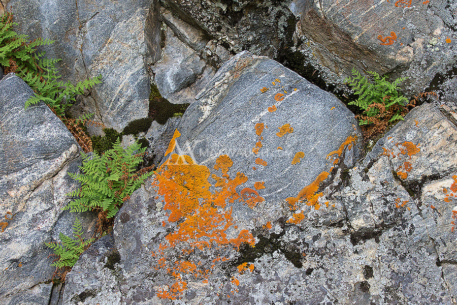 Rocks, lichen and ferns in Yellowstone.