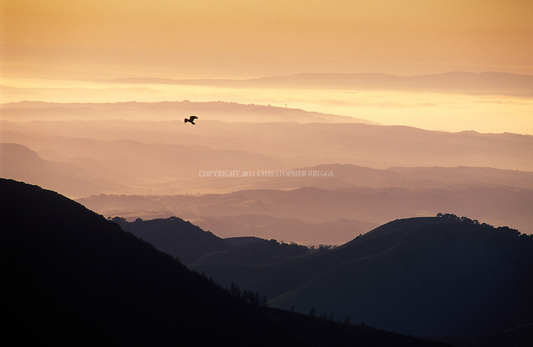 A bird of prey hovers over the San Rafael Mountains with coastal fog blanketing the range at sunset.