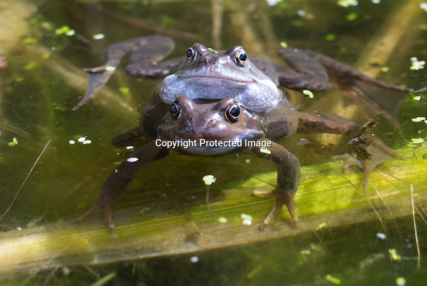 01/04/16<br />