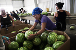 Des travailleurs migrants mexicain dans une usine d'emballage de pasteques, en Caroline du Nord, juillet 2012. Migrant farm workers work in a watermelons factory, in North Carolina, july 2012.