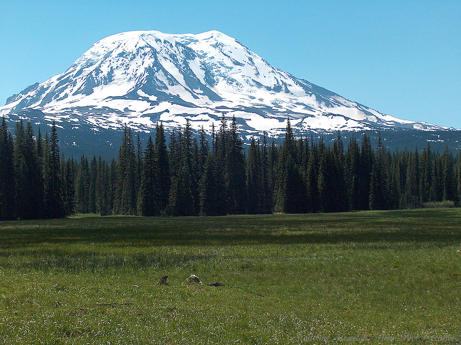 Mount Adams at Muddy Meadows, just outside of Mt Adams Wilderness, Gifford Pinchot National Forest, near Randle, Washington State, USA.