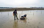 Foto: VidiPhoto<br /> <br /> ELST &ndash; Op hun knie&euml;n in het modderige water, planten medewerkers van Gebr. Visscher uit Genemuiden donderdag de eerste van ruim 600.000 rietwortels in een groot moerasgebied bij Elst, tussen Arnhem en Nijmegen. Het gebied ten westen van de A325 is de derde fase van het enorme landschapspark Lingezegen, een 1700 ha. groene buffer tussen de grote Gelderse steden. De planters hebben inmiddels al flink wat waadpakken versleten. Het voormalige oorlogsfront van Market Garden ligt namelijk nog bezaaid met granaatscherven waaraan ze regelmatig hun waterdichte neopreenbescherming openhalen. Zo'n 35 ha. van het enorme natuur/recreatiegebied is bestemd voor moeras dat allerlei bijzondere vogel- en andere diersoorten moet aantrekken. Op het deel wat nu wordt ingeplant graasden vorig jaar nog koeien. Het planten gebeurt achter de graafmachines aan. Op dit moment wordt er zo&rsquo;n 23.000 kuub grond verwijderd. De rietplantjes komen van een kweekveld bij Genemuiden. Gebr. Visscher is de grootste rietplanter van ons land. Park Lingezegen is tevens een nationale proeftuin voor de aanleg van ecologische verbindingsvlakken.