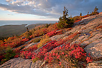 The rising sun illuminates the fiery red low sweet blueberry and other autumnal colors along the Cadillac Mountain South Ridge Trail on Mount Desert Island in Acadia National Park, Maine, USA