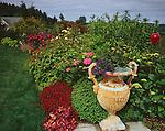 Vashon Island, WA: Potted urn next to summer perennial garden border with hydrangea, roses, heuchera, and lilies