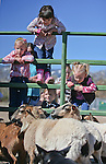 From left, Ariana Shane, Elena Lanza, both 5, and Gracie Shane, 2, check out goats and sheep at the annual Farm Days event at Fuji Park in Carson City, Nev., on Thursday, April 17, 2014.<br /> Photo by Cathleen Allison