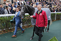 October 07, 2018, Longchamp, FRANCE - Way to Paris (No. 4) in the Parade Ring before the Qatar Prix de l'Arc de Triomphe (Gr. I) at  ParisLongchamp Race Course  [Copyright (c) Sandra Scherning/Eclipse Sportswire)]