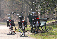 Bicycle at Public Park in Netherlands