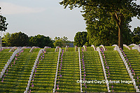 65095-01802 Flags on Memorial Day at Jefferson Barracks National Cemetery, St Louis, MO