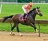 Jazz Man winning at Delaware Park on 6/5/2017