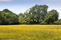 27.5.2020 Farm meadow<br /> ©Tim Scrivener Photographer 07850 303986<br />      ....Covering Agriculture In The UK....