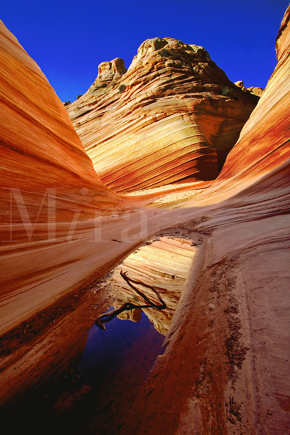 Reflection in early morning light in pothole pool, Coyote Buttes Wilderness area, Arizona. Arizona, Coyote Buttes Wilderness Area.