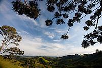 Camanducaia_MG, Brasil...Araucaria com paisagem ao fundo em Camanducaia...Araucaria with landscape in the background in Camanducaia...Foto: LEO DRUMOND / NITRO.....