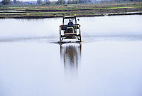 - cultivation of the rice in province of Novara, seeding....- coltivazione del riso in provincia di Novara, semina