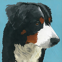 Portrait of Bernese Mountain Dog ExclusiveImage