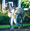 Waterford Crystal in the paddock at Delaware Park on 10/8/15