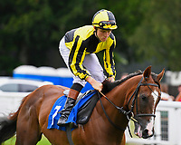 Dandy Flame ridden by Finley Marsh goes down to the start during Ladies Evening Racing at Salisbury Racecourse on 15th July 2017