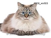 Xavier, ANIMALS, REALISTISCHE TIERE, ANIMALES REALISTICOS, FONDLESS, photos+++++,SPCHWS623,#A#