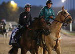 November 01, 2018 : Well Done Fox in preparation for the Breeders' Cup on November 01, 2018 in Louisville, KY.  Candice Chavez/ESW/CSM