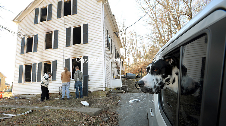 WINSTED  CT, 19 FEBRUARY  2012-021912JS02-Zeus, a Great Dane sits in a car with three other dogs that lived in the home at 133 Spencer Street in Winsted. An early morning fire heavily damaged the home on Sunday and the home may be a total loss. Officials were investigating to determine the cause of the fire. .Jim Shannon Republican-American