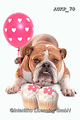 Samantha, ANIMALS, REALISTISCHE TIERE, ANIMALES REALISTICOS, funny photos, photos+++++,AUKP70,#a#, EVERYDAY ,party
